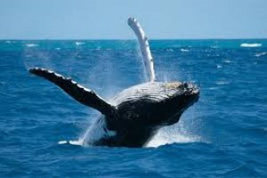 whale watching wale beobachten